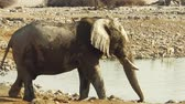 namib desert : Etosha National Park elephant pool in Namibia.