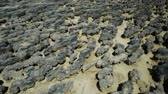 organism : Close-up of Hamelin Pool Stromatolites with low tide a protected Marine Nature Reserve in Shark Bay, Western Australia. Natural background. Stock Footage