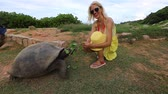 SLOW MOTION: caucasian happy tourist woman feeding a male of Aldabra Giant Tortoise, Aldabrachelys gigantea, tortoise native to Aldabra atoll. Popular tourist attraction in La Digue Island, Seychelles