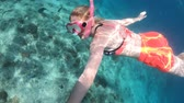 シーライフ : Girl in bikini in apnea at Seychelles. Travel lifestyle watersport activity. Young caucasian woman snorkeling in tropical turquoise sea. Woman free diving swims in St. Pierre Island coral reef