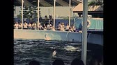 70年代 : Miami, Florida, United States - Circa 1979: dolphin show jumping at Seaquarium of Miami in 70s with animal trainer. The historical United States of America in 1970s.