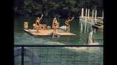 70年代 : Miami, Florida, United States - Circa 1979: dolphin show with people in vintage 70s dress. Seaquarium home of flipper of Miami in 70s with animal trainers. Historical USA archive of America in 1970s