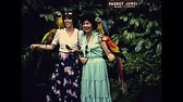 70年代 : Miami, Florida, United States - Circa 1979: South American parrots touristic feeding, in Miami Seaquarium park in Florida in 70s. Historical United States of America in 1979. 動画素材