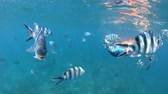 apnee : SLOW MOTION: Third person view of woman snorkeling underwater with fishes at Felicite Island. Split view exploring sea life of Indian Ocean, under and above water. Coral reef landscape of Seychelles.