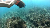 apnee : SLOW MOTION: Female in apnea at Seychelles, Indian Ocean. Travel lifestyle watersport activity. Young caucasian woman snorkeling in tropical Felicite Island sea. Woman free diving swims in coral reef.