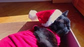 киска : sleeping tired black cat in Santa Claus hat sitting on its box. resting for greeting card with copy space. Стоковые видеозаписи