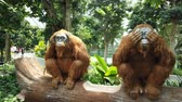 orchidea : Singapore - Aug 8, 2019: Two orangutans Sculpture, Topiary Walk at Canopy Park. Jewel Changi Airport is nature-themed with gardens, attractions, a hotel, retail and restaurants, opened in 2019. Wideo