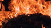 inferno : Close up of flames and glowing trees and plants in forest Stock Footage
