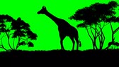 keňa : giraffe sillouette - green screen