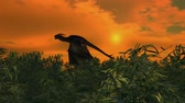 wyvern : dragon flies over bamboo forest on sunset background