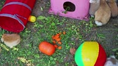 Rabbit playground in garden. Rabbits playing. Stock mozgókép