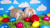 lop : Easter bunny cute rabbit with eggs. Egg rabbits colorful background.