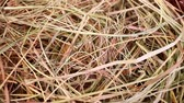 ilustrado : Hay straw rabbit food grass