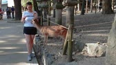 雄大な : Unidentified tourist feeds a deer in Nara Park, Japan. Free roaming sika deer stroll among tourists at this large city public park area, Nara Koen, around Kasuga Taisha Shrine.