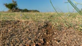 invasione : ant road to the anthill