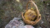 vime : Wicker basket full of forest mushrooms on nature background