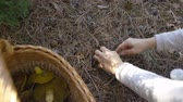 expressando positividade : Mushrooming, woman picking mushrooms in the forest