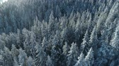 ток : aerial view of the snow-covered spruce forest Стоковые видеозаписи