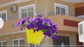 garnek : Traditional mediterranean style flower decoration on the street Wideo