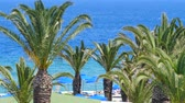 cipreste : Beautiful Mediterranean coastline with windy palm trees and clear blue water Europe Stock Footage