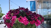 tencere : Traditional mediterranean flower decoration on the street home