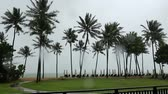 muson : Palms tree at monsoon in tropical island . Stok Video