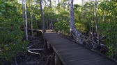 уличный фонарь : Long walk on a boardwalk in the forest in Australia, dolly in Стоковые видеозаписи