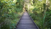 rehberlik : Walking on Mangrove boardwalk in Cape Hillsborough national park, Australia Stok Video