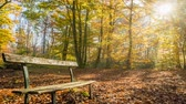 青々とした : Bench in Fontainebleau forest in autumn, zoom in