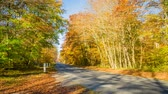 paryż : Road in Fontainebleau forest in autumn close to Paris, zoom in Wideo