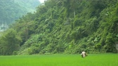 cultura thai : Old Women Working Rice Farmer on Green Field around Lake Babe, Vietnam