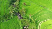Aerial view of rice terraces. Landscape with drone. Agricultural landscape from the air. Rice terraces in the summer. - Jatiluwih rise terrace, Bali, Indonesia. Travel - image Archivo de Video