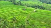 Aerial view of rice terraces. Landscape with drone. Agricultural landscape from the air. Rice terraces in the summer.  Jatiluwih rise terrace, Bali, Indonesia. Travel - image Archivo de Video