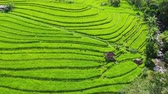 colline : Aerial view of rice terraces. Landscape with drone. Agricultural landscape from the air. Rice terraces in the summer.  Jatiluwih rise terrace, Bali, Indonesia. Travel - video