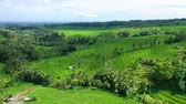 Aerial view of rice terraces. Landscape with drone. Agricultural landscape from the air. Rice terraces in the summer. - Jatiluwih rise terrace, Bali, Indonesia. Travel - video
