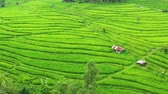 Aerial view of rice terraces. Landscape with drone. Agricultural landscape from the air. Rice terraces in the summer. Jatiluwih rise terrace, Bali, Indonesia. Travel - video