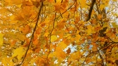 niebo : Autumn scenery with deciduous trees. Wideo