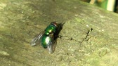 frasco pequeno : Fly sitting on some wood