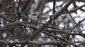 gwóżdź : winter hedgerow thorns water and ice -natural background
