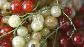 red currant : red and white currants left rotated plate close up Stock Footage