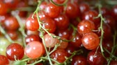 red currant : Berries of red and white currants.