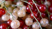 contesto : red currants slow motion hd footage Filmati Stock