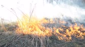 smrt : Burning old dry grass, forest danger concept hd footage