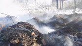 лес : Small forest garbage fire stock hd footage
