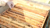 рамка : Cleaning and Inspecting Hive hd stock footage Стоковые видеозаписи