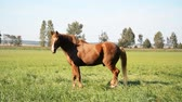 輪郭 : brown horse on meadow or green grass, summer day