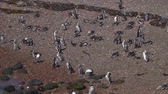 arjantin : Puerto Madryn Pinguins and Landscapes