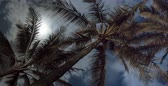 yukarıya bakıyor : Tropical Palm Trees at Night. Lit up by the Moon. Stok Video