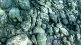 granito : stones under water