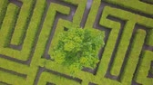 хедж : Aerial view of maze, green labyrinth in park, drone point of view from above.